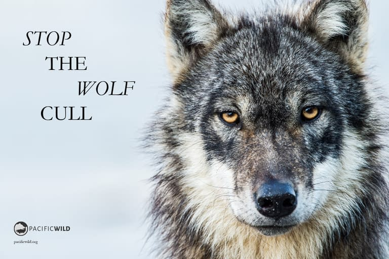 Hobo_19_wolfcull